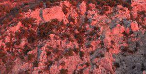 Светящаяся скала. Крым